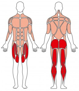 Crosstrainer target-muscles