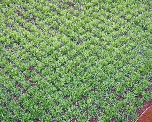 Fallschutz-Rasengitterplatte 65mm mit Gras