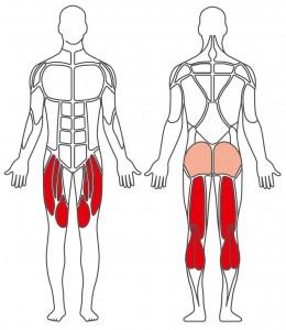 Fitnessfahrrad Muskelgruppen