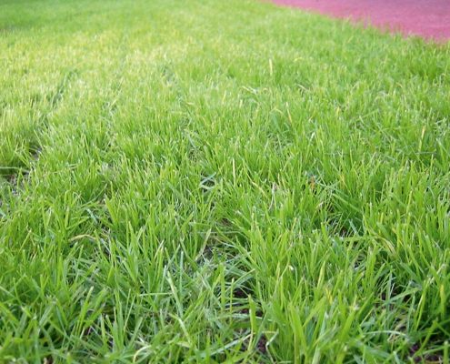 Lawn-grating system with grass